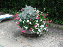 pool barrel planter